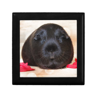 Black Short Haired Romance Guinea Pig Small Square Gift Box