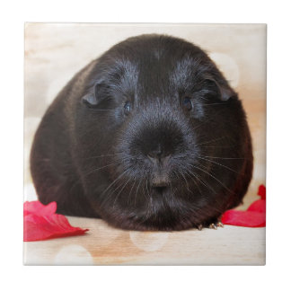 Black Short Haired Romance Guinea Pig Small Square Tile