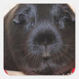Black Short Haired Romance Guinea Pig Square Sticker