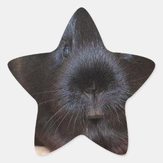 Black Short Haired Romance Guinea Pig Star Sticker