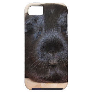 Black Short Haired Romance Guinea Pig Tough iPhone 5 Case