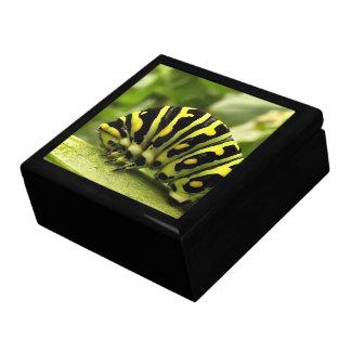 Black Swallowtail Caterpillar Gift Box