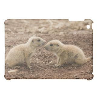 Black Tailed Prarie Marmot Case For The iPad Mini