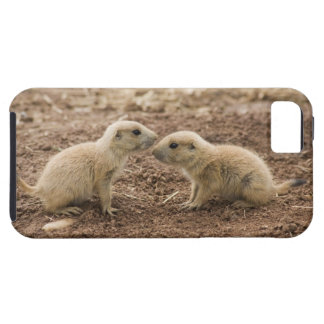 Black Tailed Prarie Marmot iPhone 5 Case