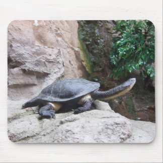 Black Turtle With Long Neck On The Rocks Mouse Pad