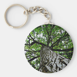 Black Walnut Trunk and Branches Key Ring