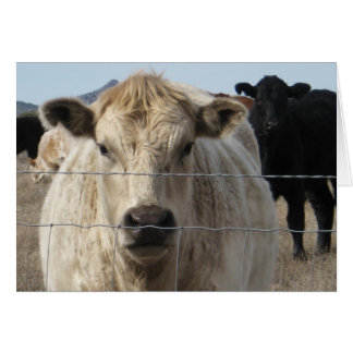 Black & White Cows - Western Change of Address Card
