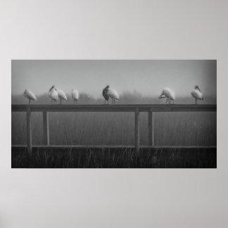 Black & White Ibis in Fog Print
