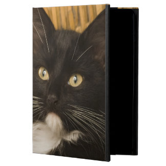 Black & white short-haired kitten on hamper lid, cover for iPad air