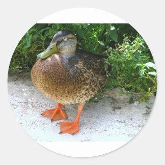 Black & Yellow toned Bird with Orange Feet Classic Round Sticker