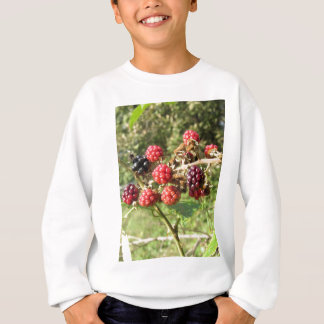 Blackberries bunch sweatshirt