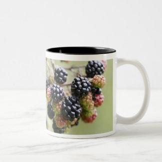 Blackberries growing outdoors. Two-Tone coffee mug