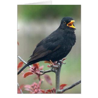 Blackbird sitting in a tree greeting card