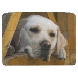 Blond Labrador retriever, Patagonia, Chile iPad Air Cover