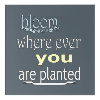 Bloom Where Ever You Are Planted Acrylic Print