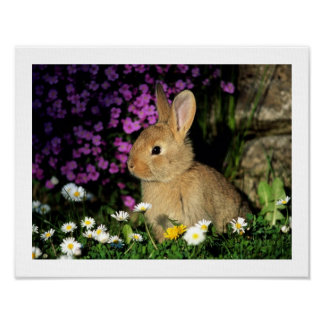 Blossom Flower Spring Bunny Rabbit Animal Pet Cute Poster