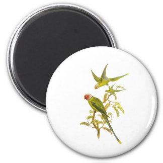 Blossom-headed Parakeet 6 Cm Round Magnet
