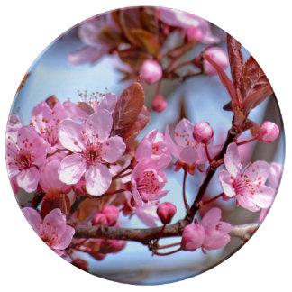 Blossom of Cherry Plate