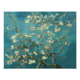 Blossoming Almond Tree - Van Gogh Art Photo