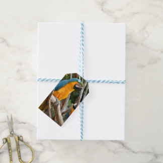 Blue And Gold Macaw Gift Tags