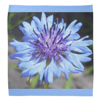 Blue Bachelor's Button Floral Bandana