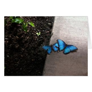Blue Butterflies Notecard Note Card