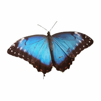 Blue Butterfly Animal Pattern Peace Love Destiny Standing Photo Sculpture