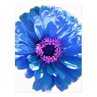 Blue Daisy Postcard
