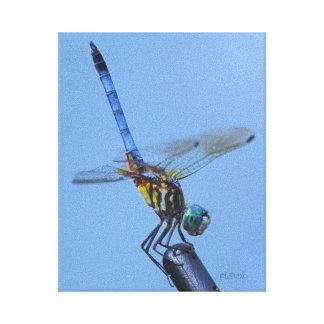 Blue Dasher Dragonfly in Obelisk Posture Stretched Canvas Print
