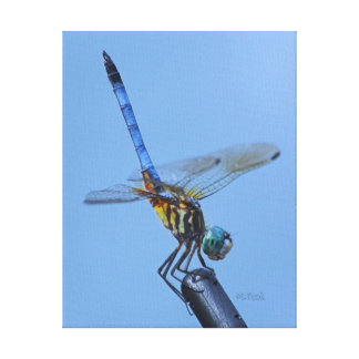 """Blue Dasher Dragonfly in """"Obelisk Posture"""". Gallery Wrapped Canvas"""