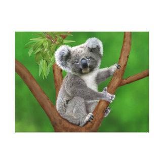 Blue-Eyed Baby Koala Bear Canvas Print