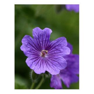 Blue Geranium Postcard