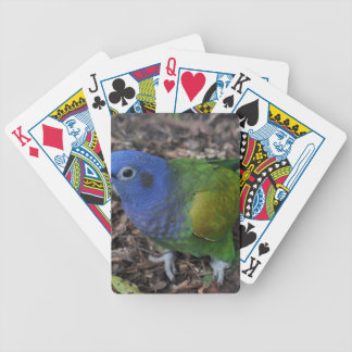 Blue Headed Amazon Parrot on ground Bicycle Playing Cards