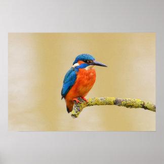 Blue Orange Kingfisher Bird Poster
