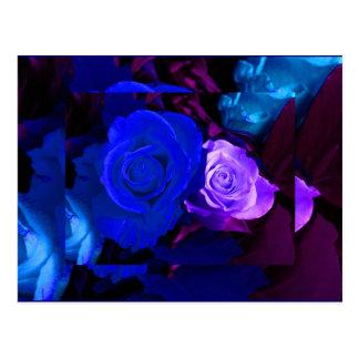 Blue Purple Rose Postcard