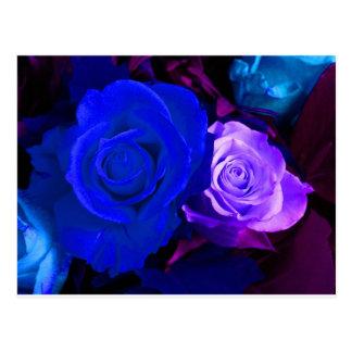 Blue Purple Rose Postcard - Customizable Postcards