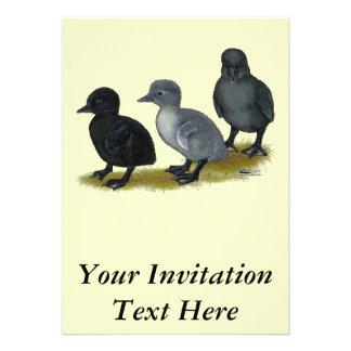 Blue Runner Ducklings Custom Invites