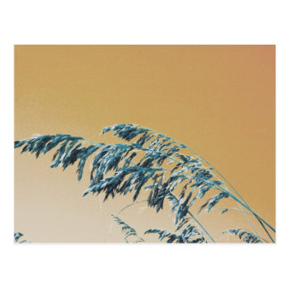 Blue Sea Oats Brown Orange sky picture Post Card