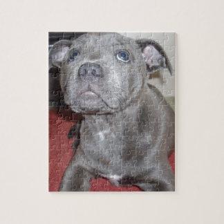 Blue_Staffordshire_Bull_Terrier_Puppy,_Jigsaw Jigsaw Puzzle