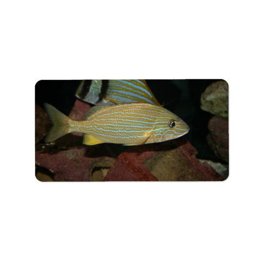 blue striped yellow fish saltwater animal address label
