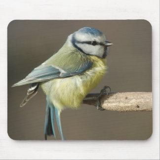 Blue tit ~ Bluetit ~ Mésange bleue ~ by GLINEUR Mouse Pad