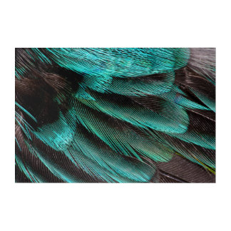Blue Wing Covert feathers Acrylic Print