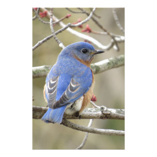 Bluebird Backside Stationery