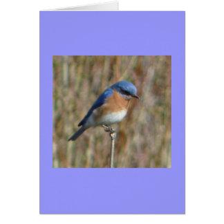 """""""Bluebird"""" Card"""