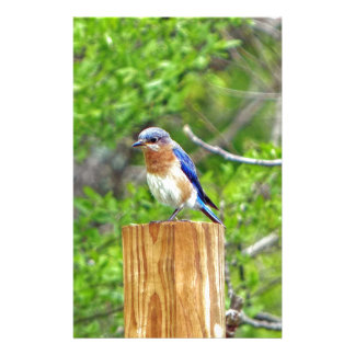 Bluebird on a Fence Post Stationery