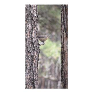 Bluebird resting on Tree Limb Card