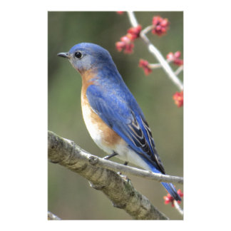 Bluebird Stationery