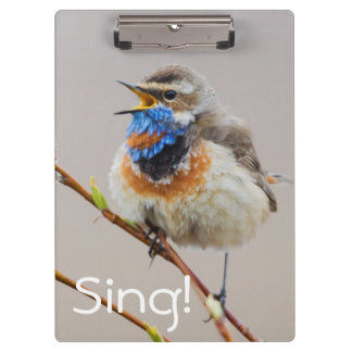 Bluethroat Singing Clipboard
