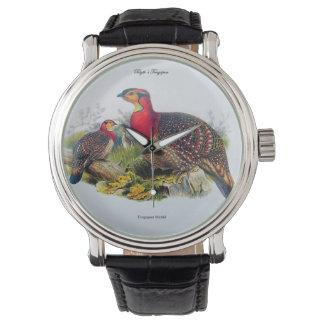 Blyth's Tragopan aka Horny Pheasant - J.Gould 1883 Watch