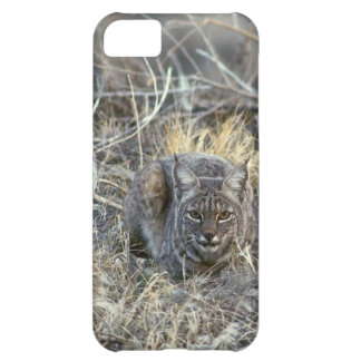 Bobcat in the Grass iPhone 5C Case